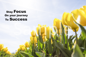 focus-and-success-landscape-sample-ver0