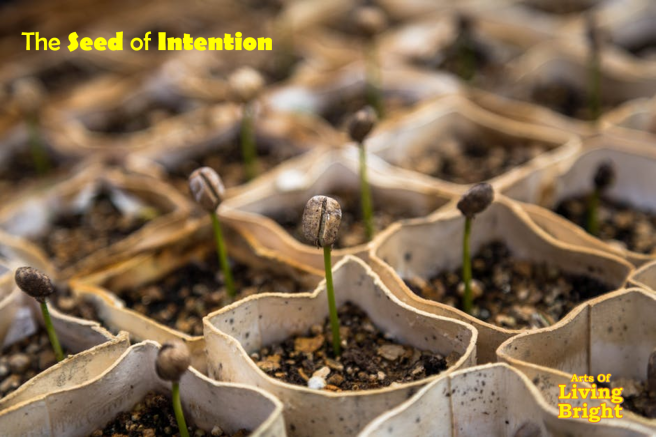 the-seed-of-intention