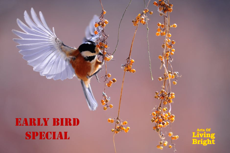 Early bird special.png